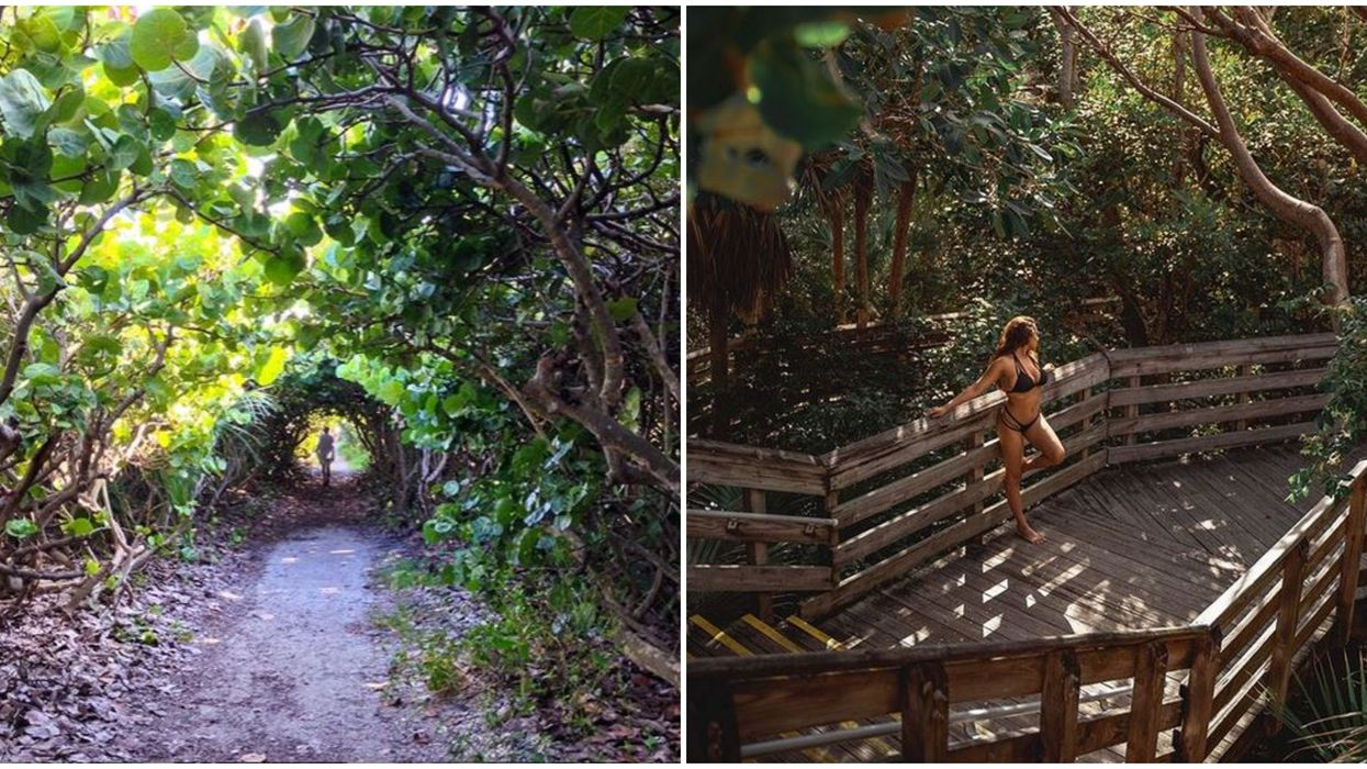 Florida Hiking Trail Takes You Through A Maze Of Tree Tunnels