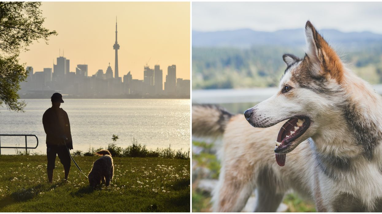 Best Cities For Dogs In The World Include 3 Canadian Ones
