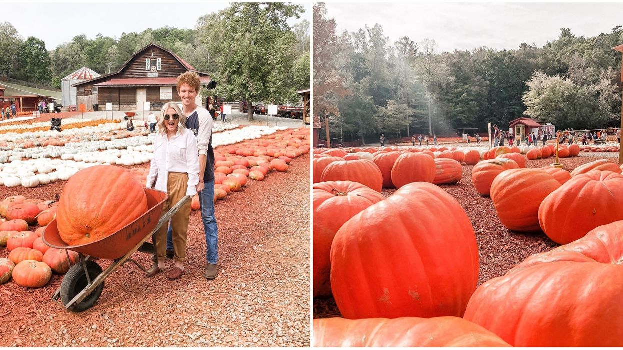Pumpkin Farm In Georgia Has Massive And Tons Of Pumpkin Variations You Can Take Home