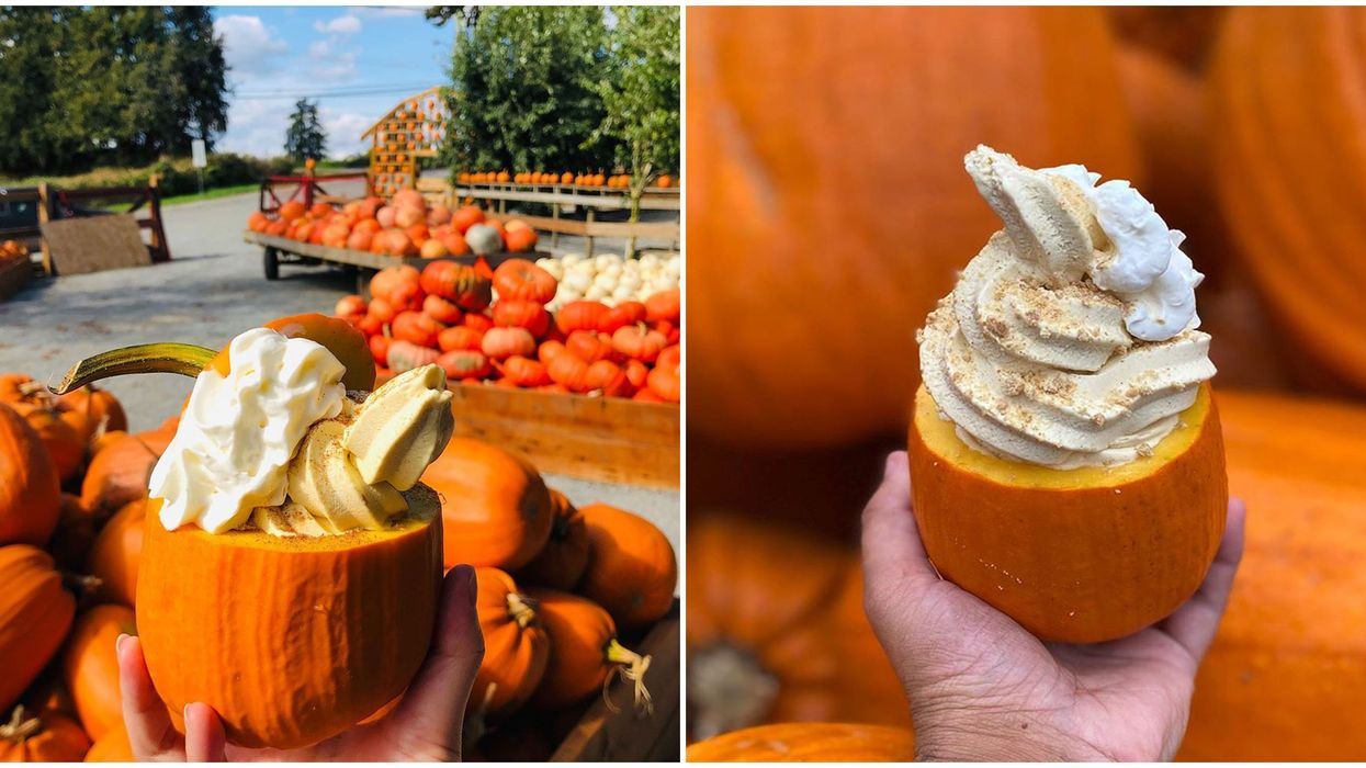 Tiny Pumpkin Spice Ice Cream-Filled Pumpkins Exist At This BC Farm