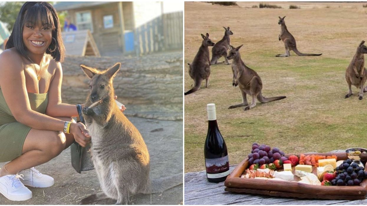 Baby Kangaroos & Wine Are On The Agenda For Calgary's Adult's Only Event This Weekend