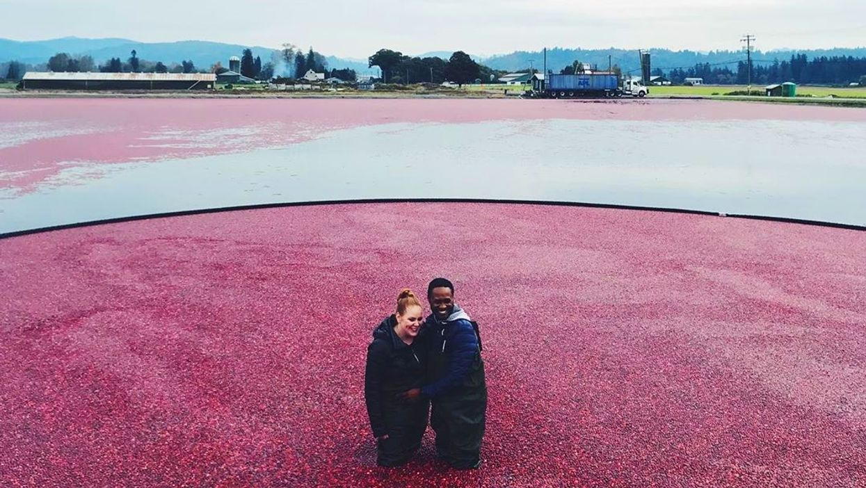 Cranberry Plunge In BC: This Farm Will Let You Jump Into A Sea Of Berries