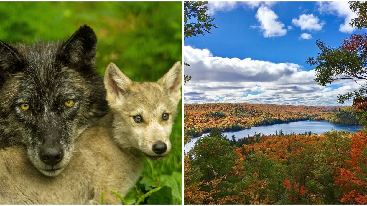 Ontario's Haliburton Forest Halloween Event Lets You Visit Real Wolves