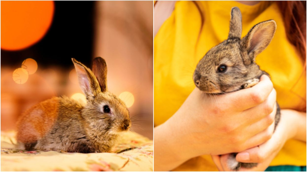 'Bunny Hug' Season In Canada Is Officially Here & It's Not What You Think