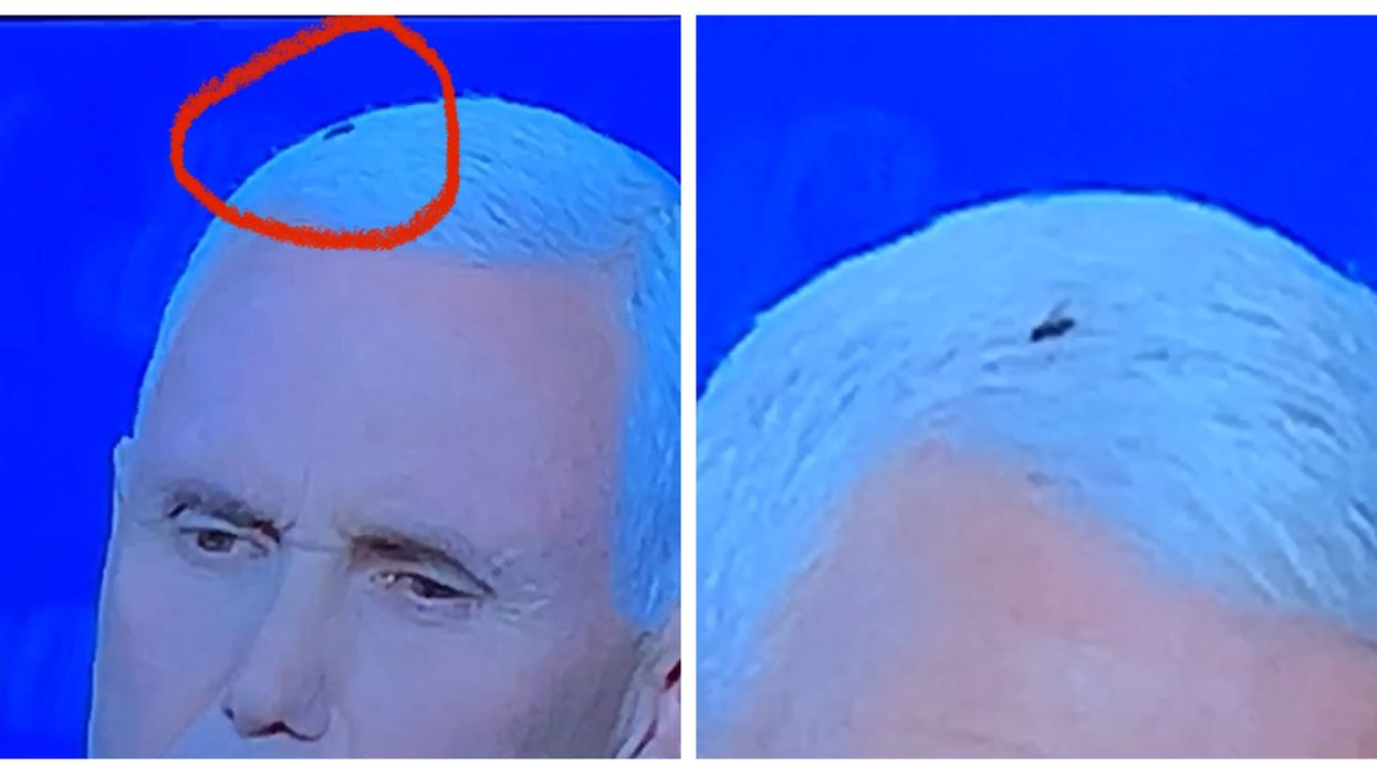 The Real Winner Of The Vice Presidential Debate Was That Fly On Mike Pence's Head