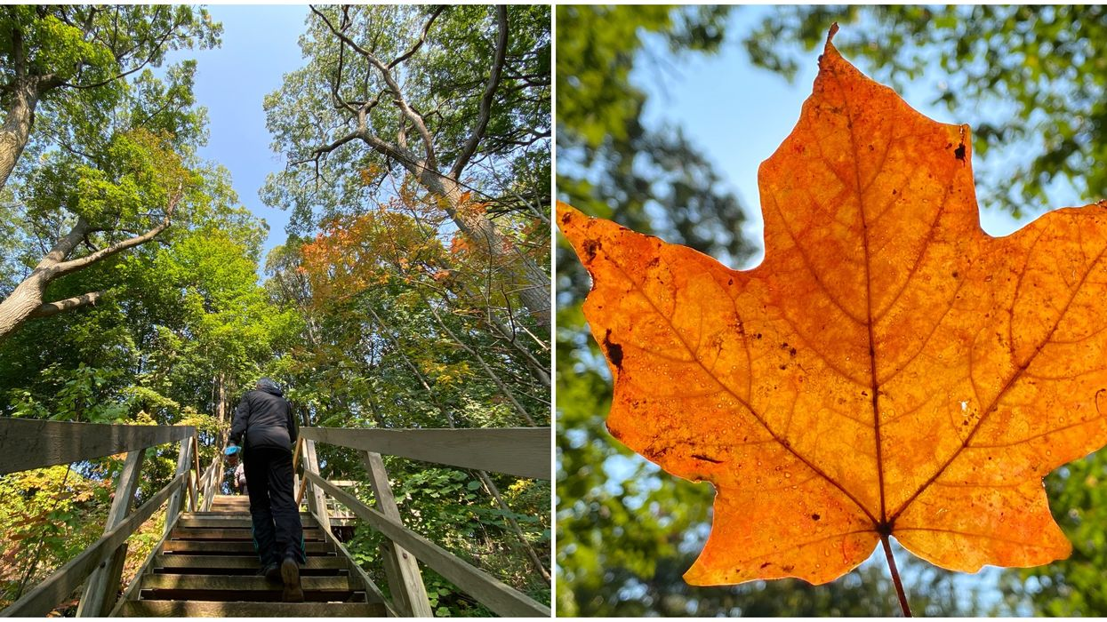 This Undiscovered Toronto Oasis Is Like A Postcard Full Of Fall Beauty (PHOTOS)
