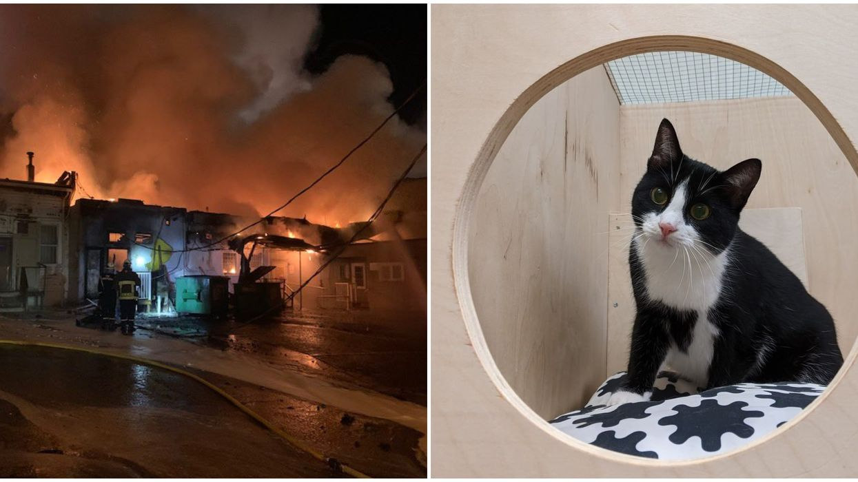 Fire In Vancouver: A Cat Hotel Went Up In Smoke & Crews Rescued All The Cute Guests