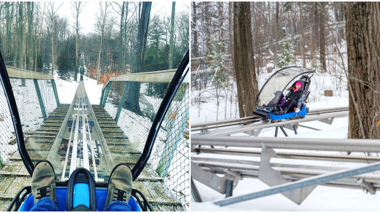Ontario's Mountain Coaster Will Take You On A Wild Ride This Winter