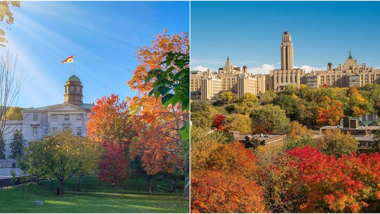 U.S. News : UdeM et McGill font partie du top 6 des meilleures universités au pays