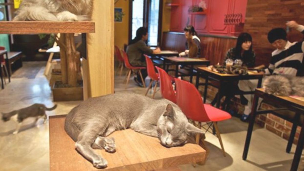 Regina Is Getting Its First Cat Cafe And It's Going To Be Purrfect