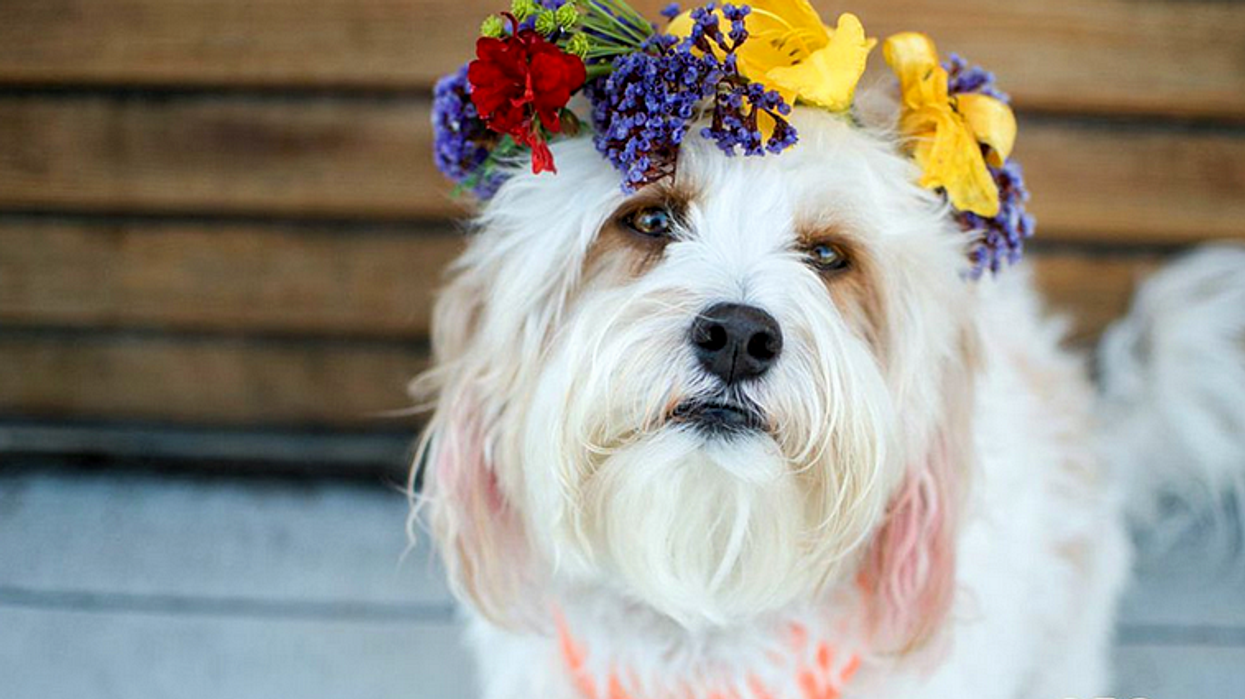 10 Types Of Dog Owners You'll  See in Toronto
