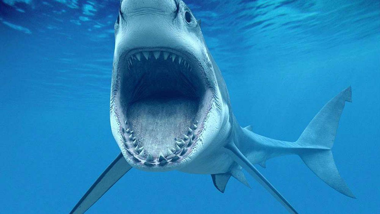 11 Things We Learnt From Shark Week 2015