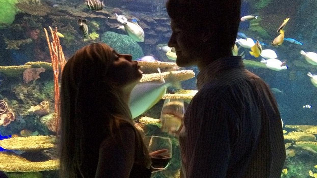 Ripley's Aquarium Now Has A Bar