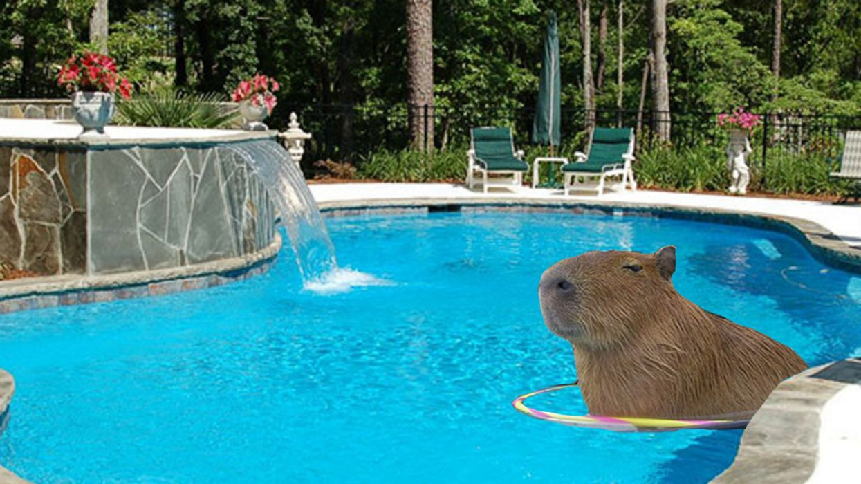 Toronto's High Park Capybara Spotted Going For A Dip