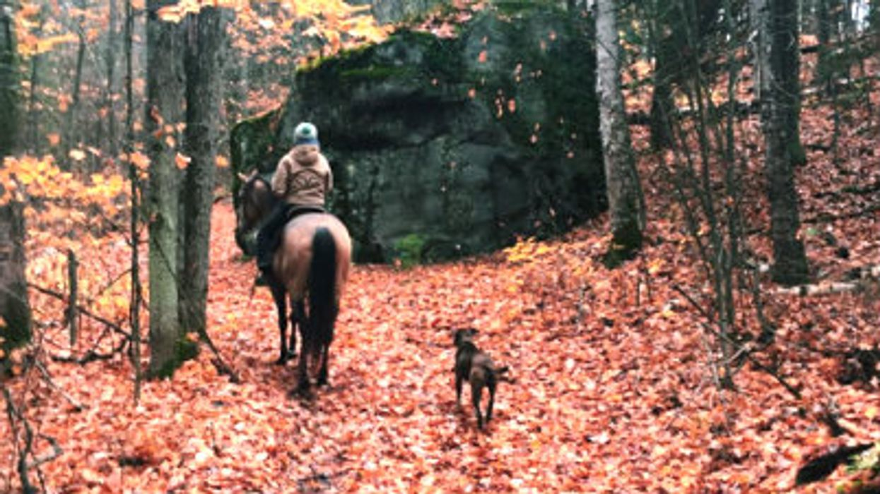 12 Beautiful Places In Ontario To Go Horseback Riding