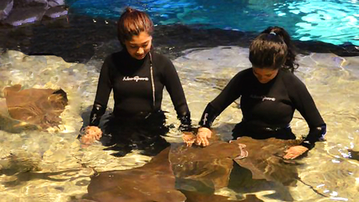 You Can Now Drop In At Ripley's Aquarium To Swim With Stingrays