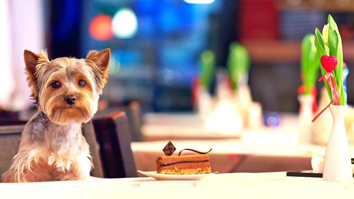 This Dog Café In Ontario Lets You Treat Your Furry Best Friend To Dessert