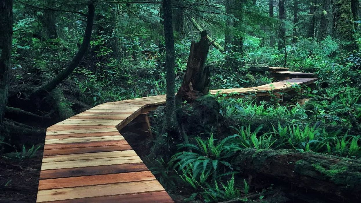 This 2-km Boardwalk Trail Takes You Through An Ancient Rainforest In Canada