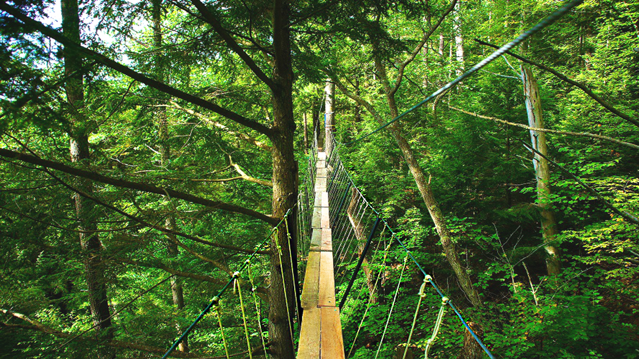 This Boardwalk Trail Is Suspended High In The Canopy Of A Forest In Ontario