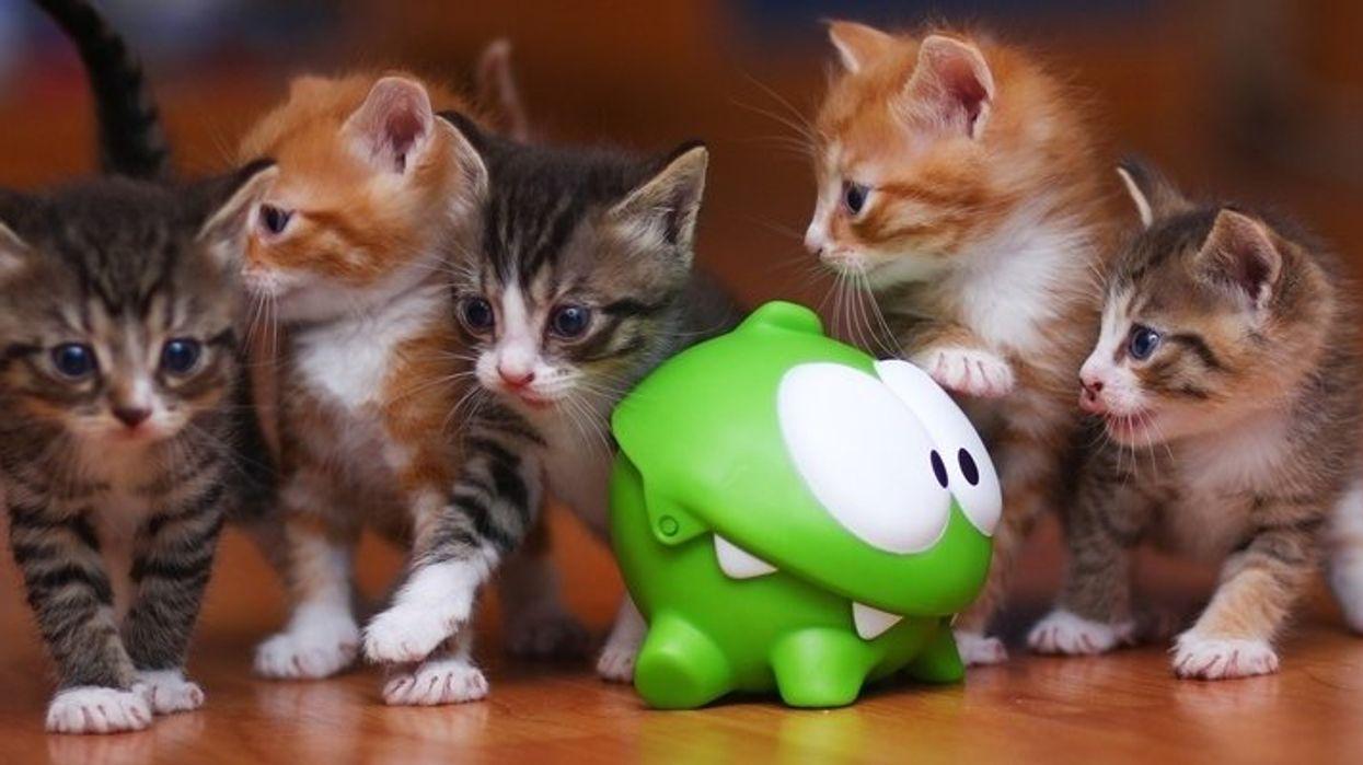 Un party de chats (gratuit) aura lieu cet été à Montréal!
