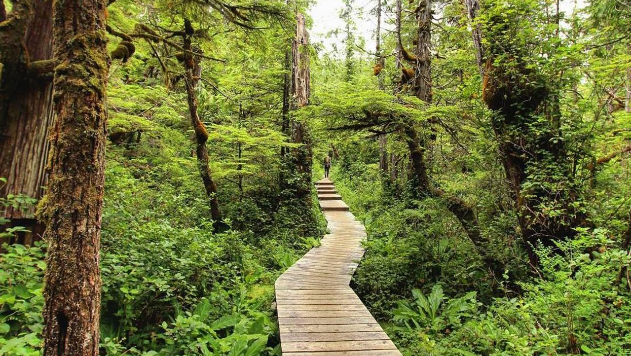 This Magical Boardwalk Trail In BC Will Make You Feel Like You're In The Tropics