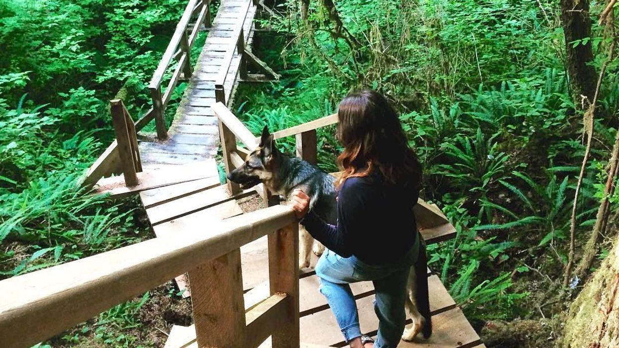 7 Breathtaking Boardwalk Trails You Must Explore In BC