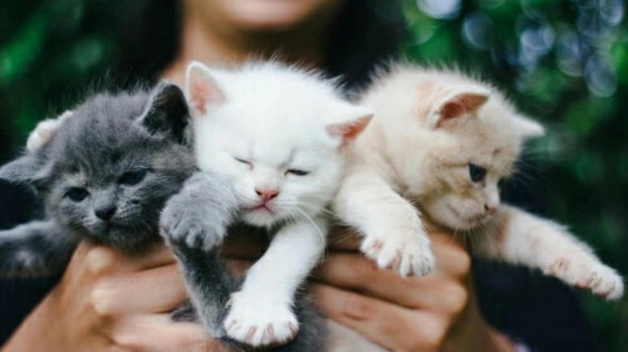 Cat lovers : l'événement gratuit pour te gâter toi et ton chat arrive à Montréal