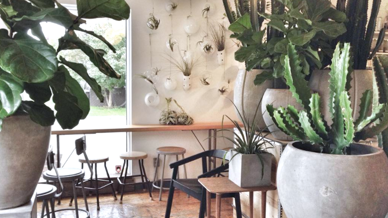 This Cafe In Ottawa Is Also A Flower Shop And It's Actually So Adorable