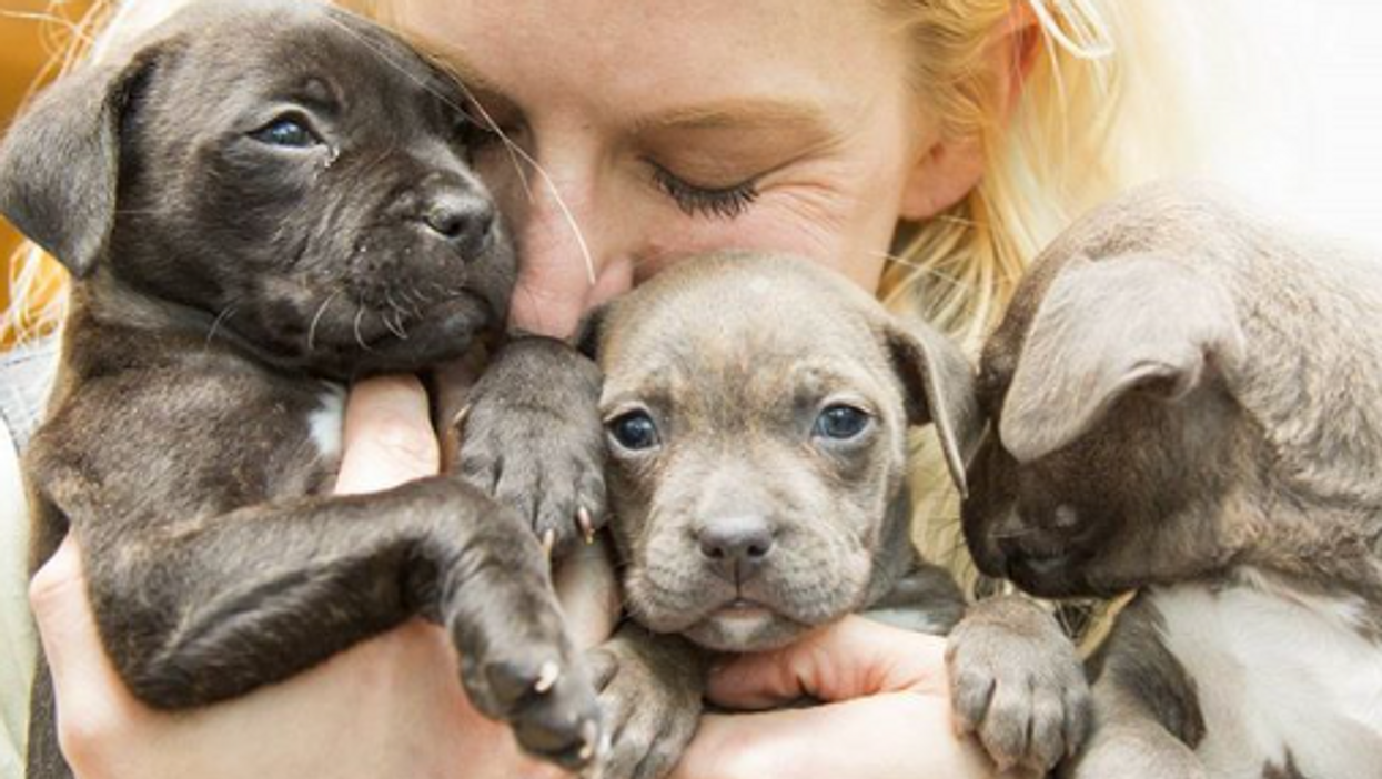 Today's The Saddest Day Of 2018 - Here's How You Can Cheer Up With Puppies In Toronto