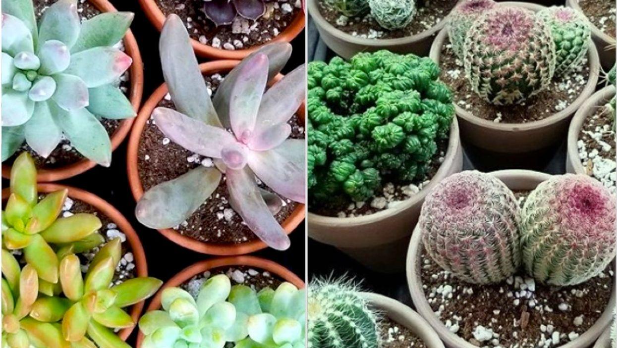 Il y a 2 grosses ventes de plantes en fin de semaine à Montréal