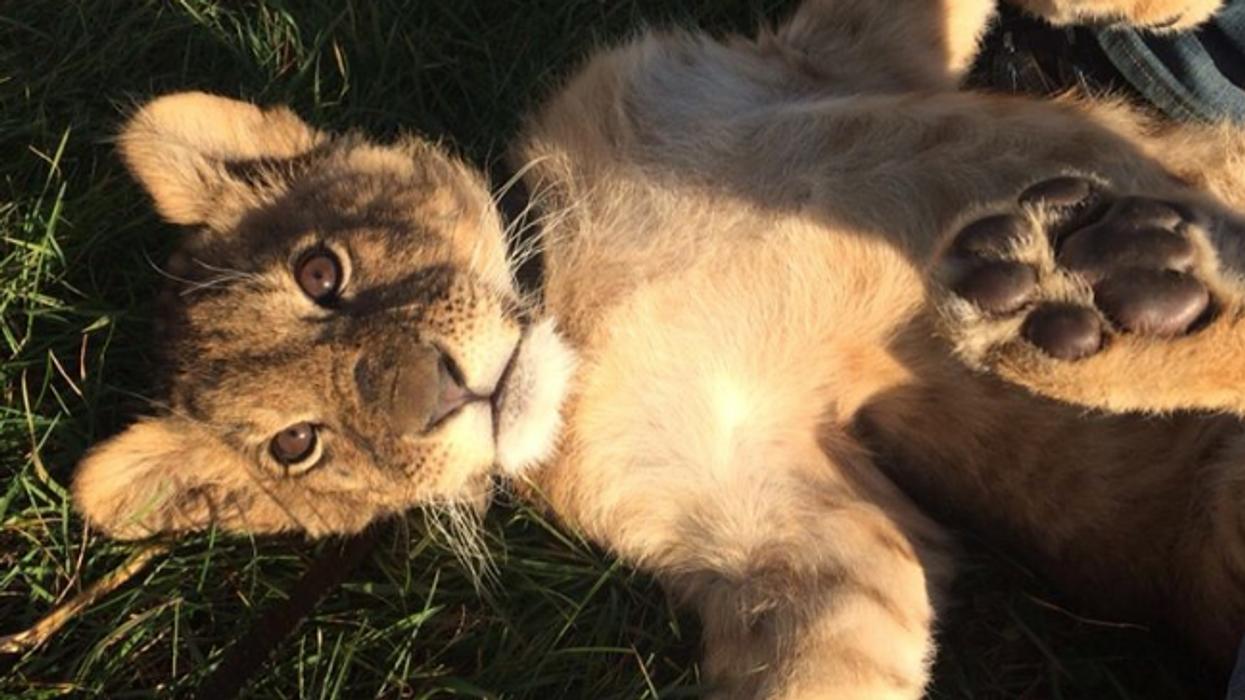 Il y a un zoo caché dans les Cantons-de-l'Est et c'est tout simplement la meilleure chose