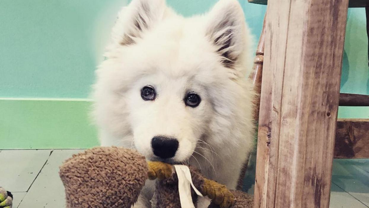 Tu peux flatter et adopter des chiens abandonnés dans ce café à Montréal en mars