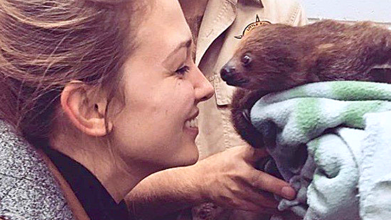 You Can Spend Your Day With Sloths At This Ottawa Event