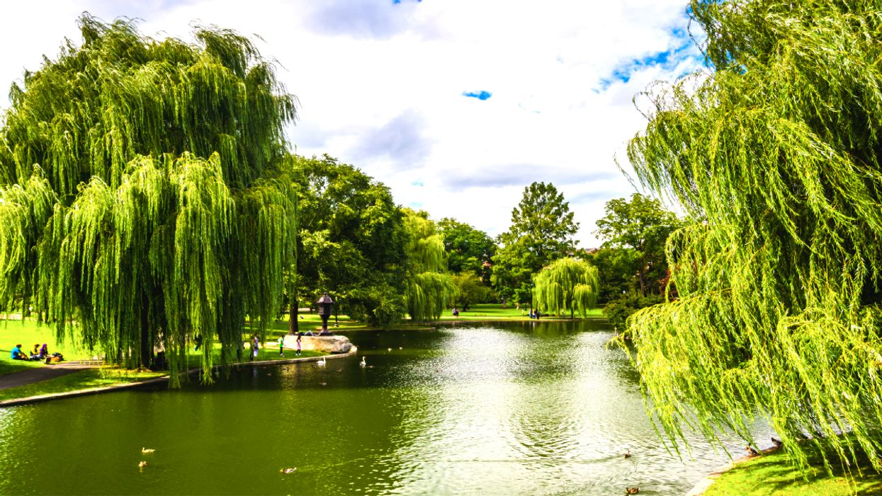 This Ontario Park Is Full Of Weeping Willows And It's Magical