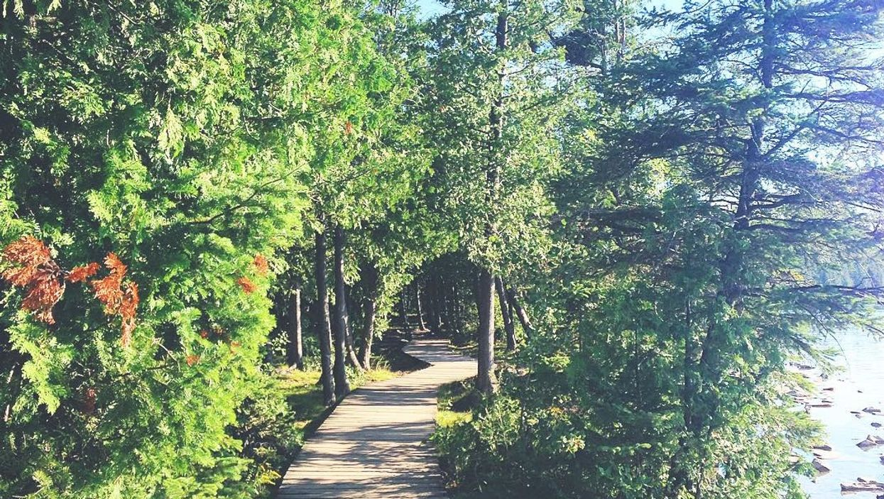 This 5-km Boardwalk Trail Takes You Through An Ancient Forest In Ontario