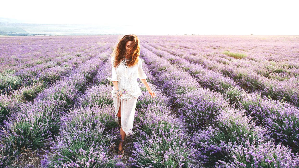 Ontario's Largest Lavender Field Will Be In Full Bloom For The Summer