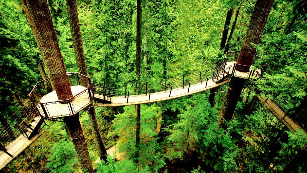 This Treetop Park In Canada Lets You Walk Along A Series Of Suspension Bridges In A Rainforest