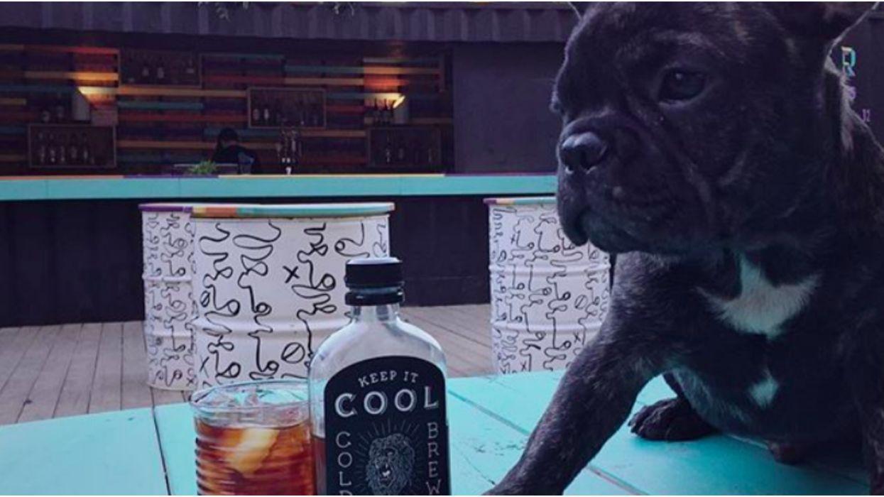 Ce bar trendy de Montréal offre des 5 à 7 avec ton chien et c'est très excitant