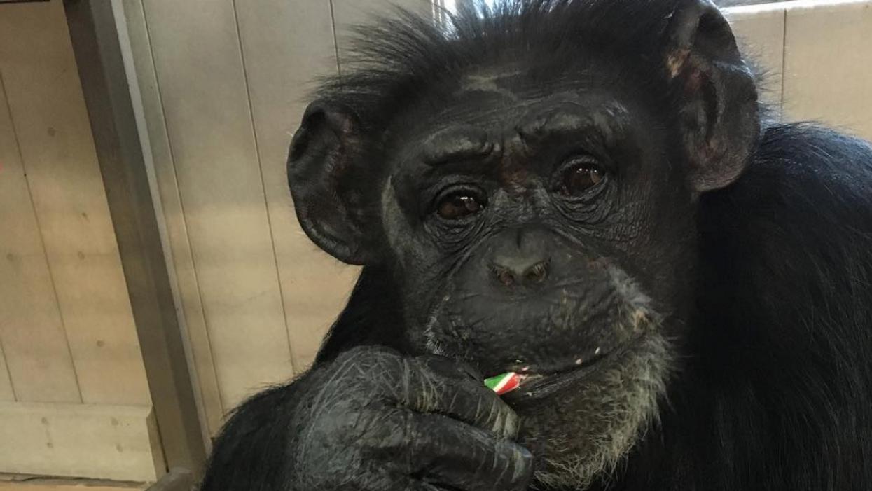 Tu peux visiter des adorables singes sur la Rive-Sud de Montréal
