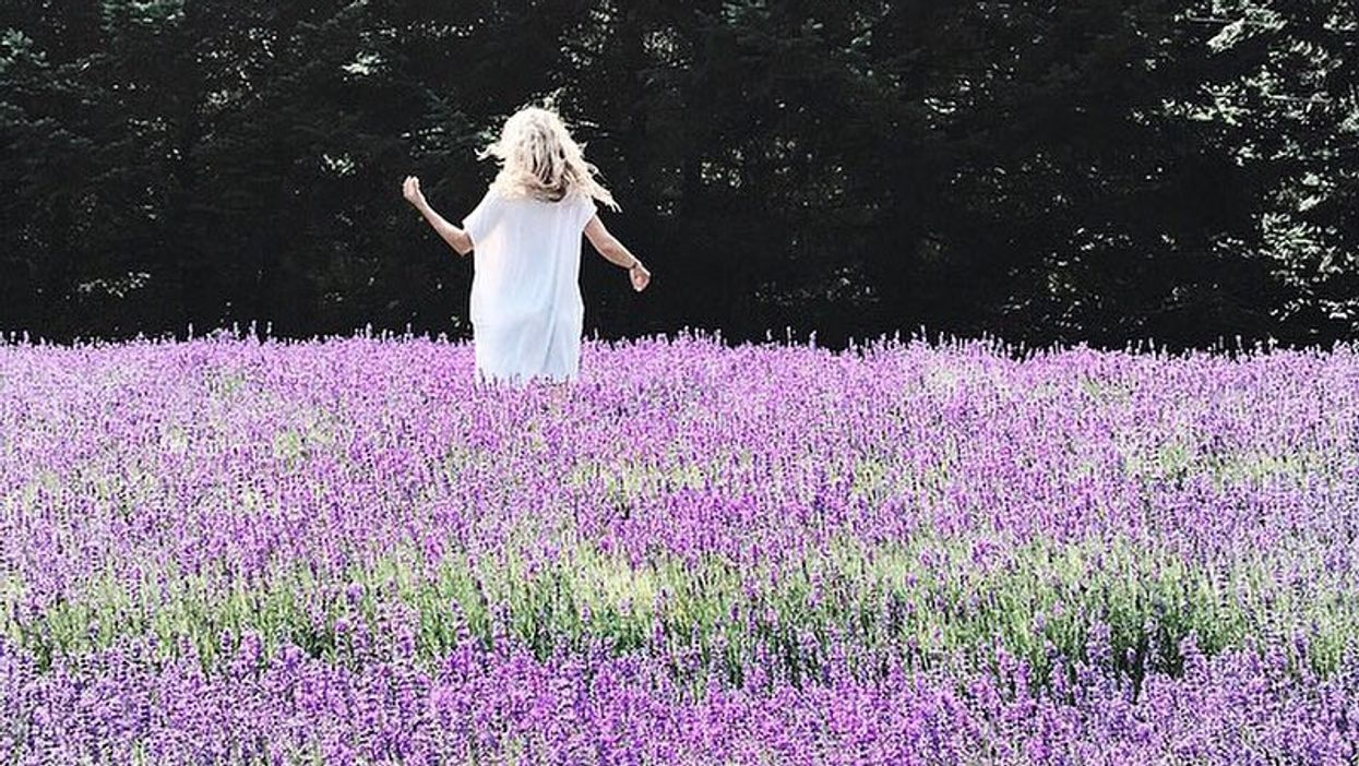 BC's Biggest Lavender Field Will Make You Feel Like You're In Paradise