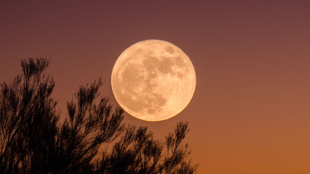 """Here Are The Best Times To See The """"Pink Moon"""" In Cities Across Canada"""