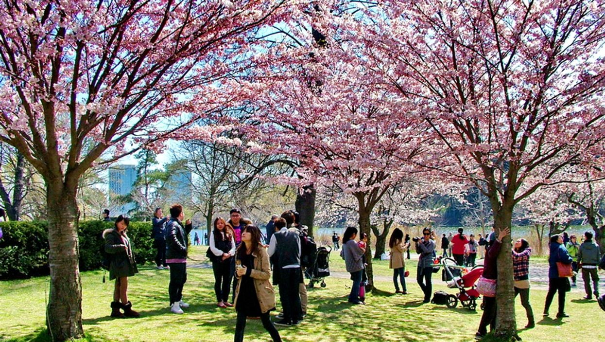 Here Are 5 Places Other Than High Park Where You Can See Cherry Blossoms Right Now