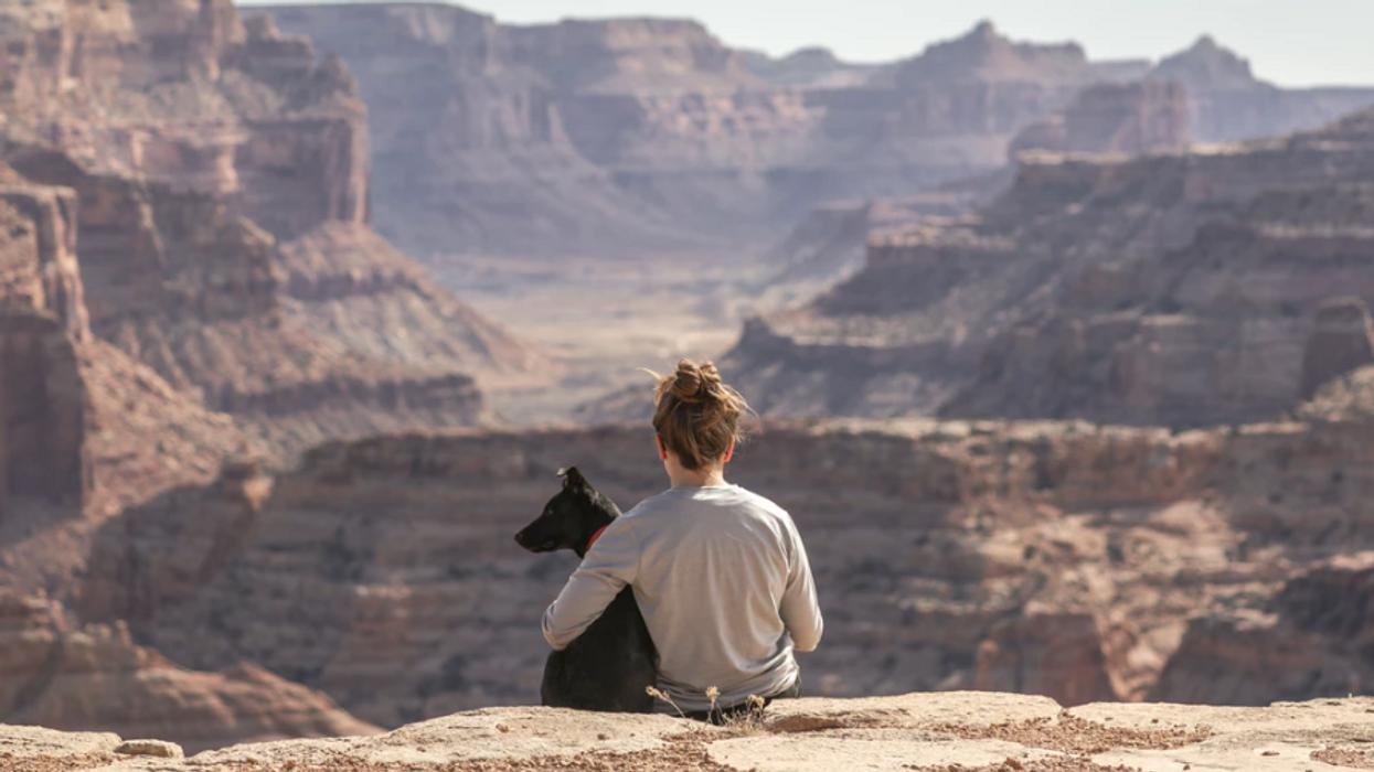 6 randonnées que tu peux faire avec ton chien pour profiter de l'été au Québec