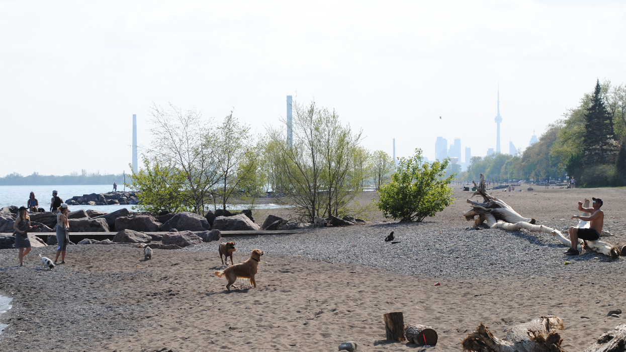There's A Secret Off-Leash Dog Beach Right Here In Toronto