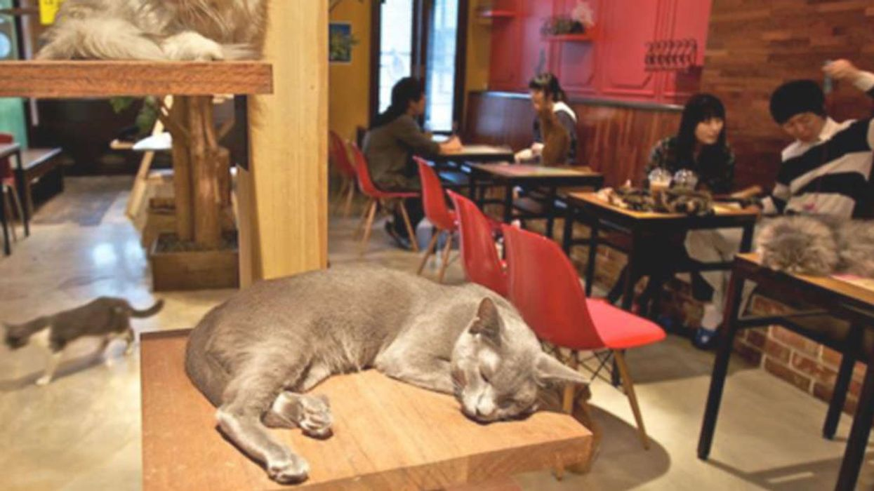 Hamilton Is Getting Its Very First Cat Cafe
