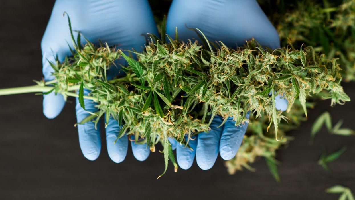 La SAQ annonce où seront ses boutiques de marijuana et commence à embaucher