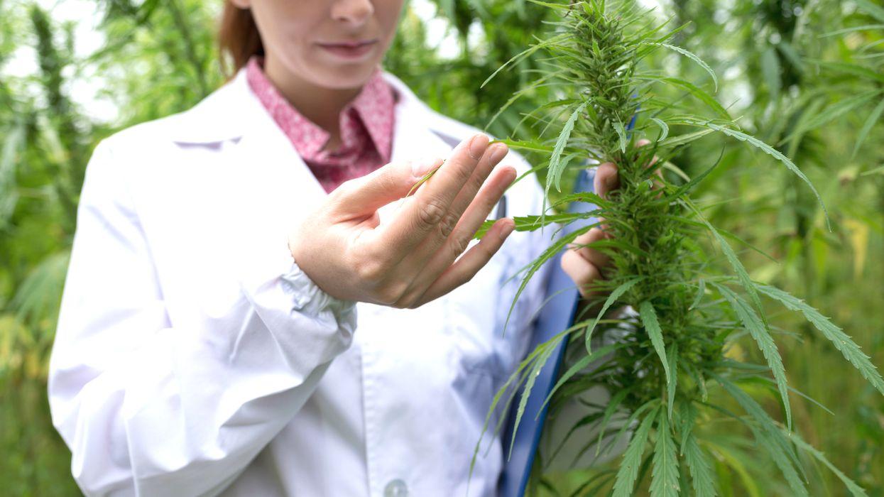 Health Canada Warns Cannabis Use Linked To Schizophrenia