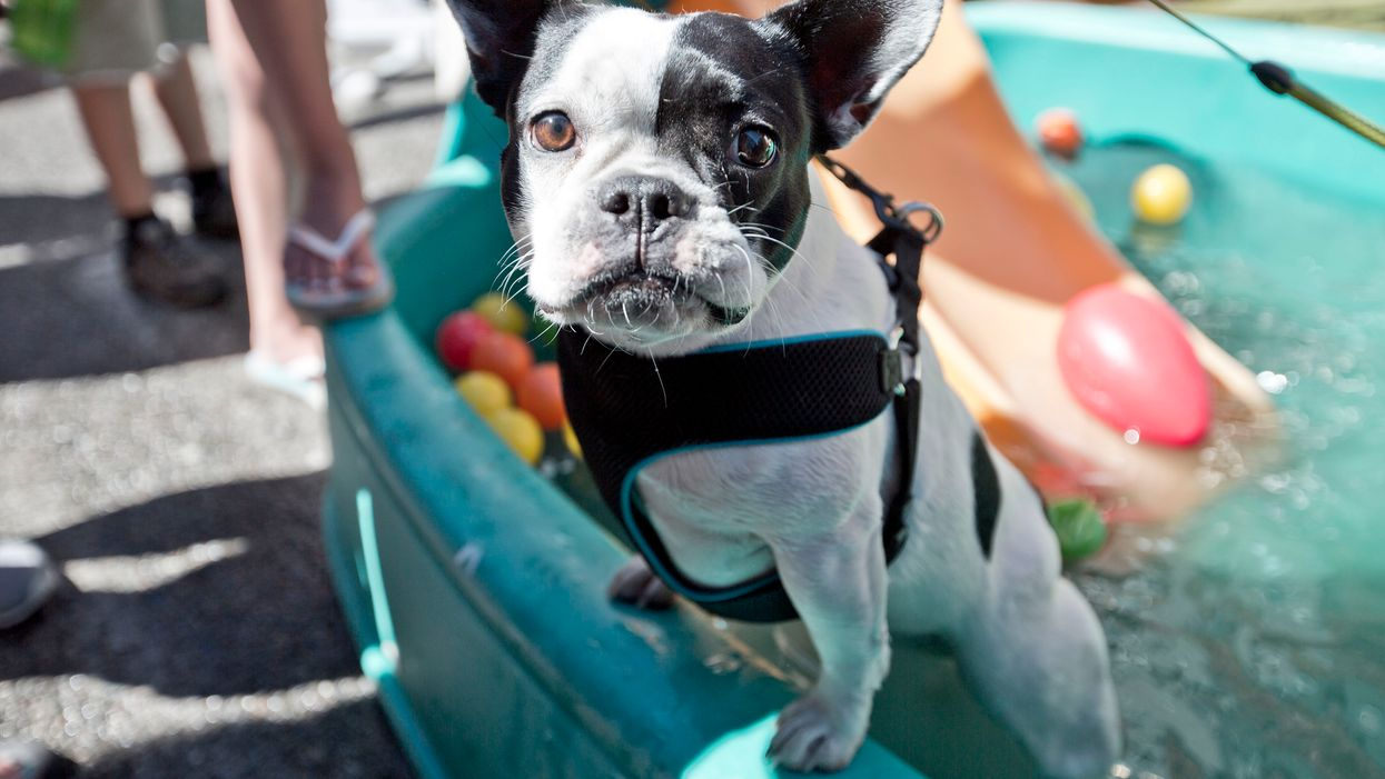 Calgary Is Hosting A Dog Festival This Month And It's Totally Free