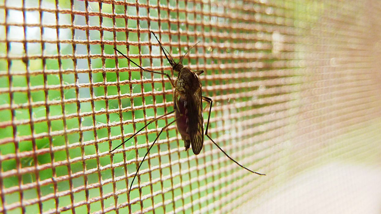 Two People Have Been Infected By Mosquitos Carrying West-Nile Virus In Ontario