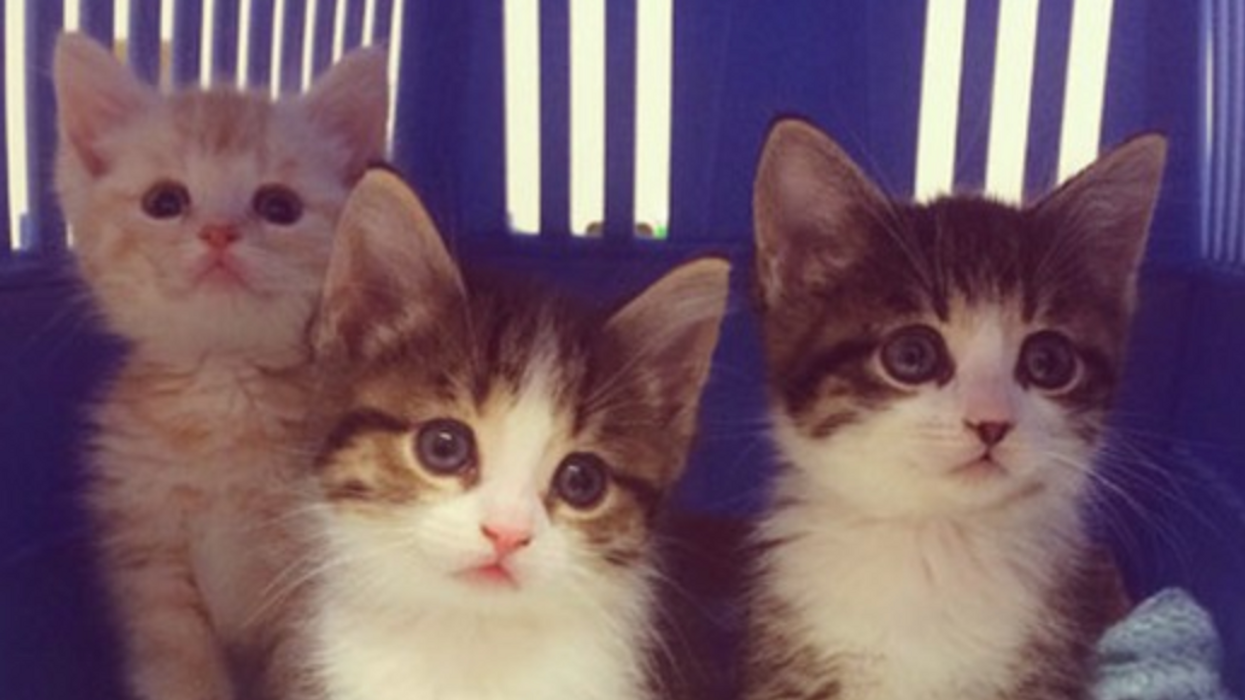 The Ottawa Humane Society Is In The Middle Of A Cat Crisis And Will Actually Pay You To Adopt A New Pet